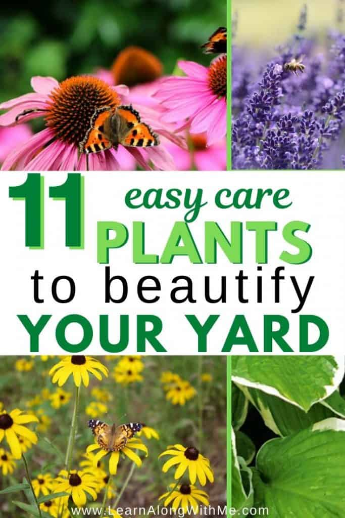 11 Easy Care Low maintenance plants to beautify your yard