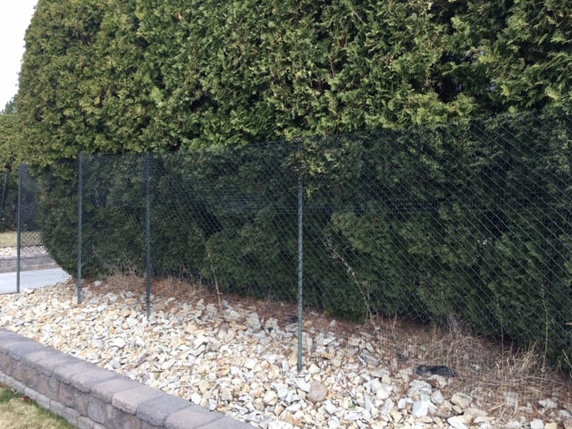 Best Privacy Fence Ideas for Backyard - a row of hedges is great because they actually get better with time.