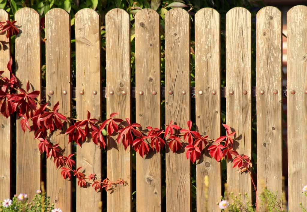 Privacy Fence Ideas - wooden boards on the same plane.