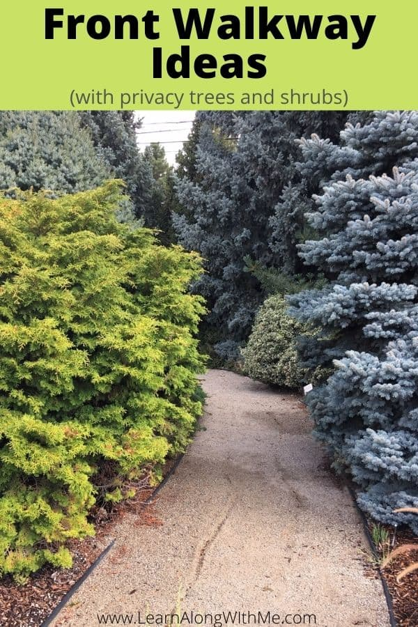 Front Walkway Ideas - crushed rock pathway lined with privacy trees and shrubs