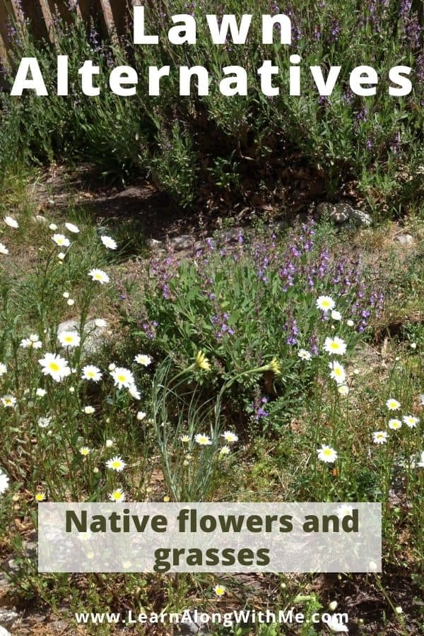 Lawn Alternatives - native flowers and grasses