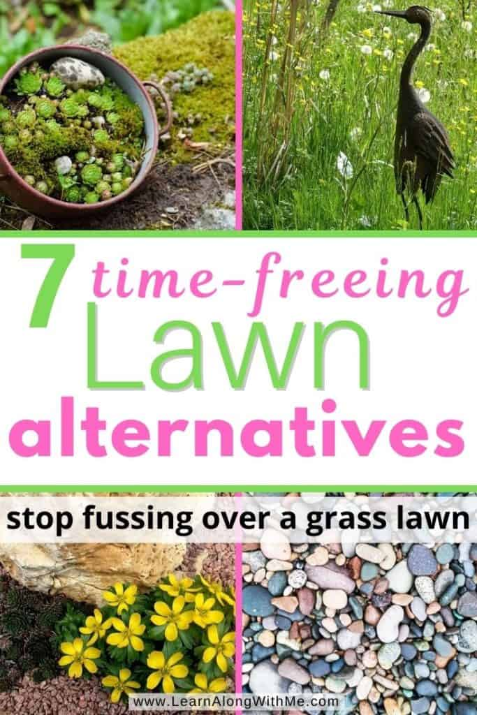 7 time-freeing Law Alternatives (great no mow options)