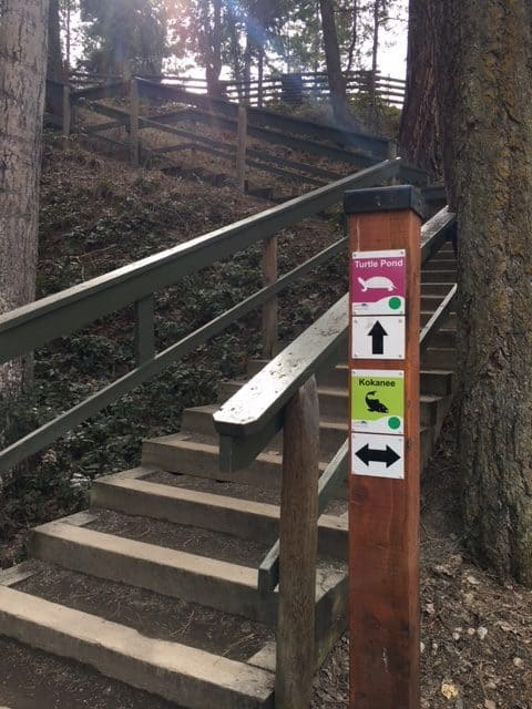 Signage pointing up the stairs  to Turtle Pond at Mission Creek Regional Park