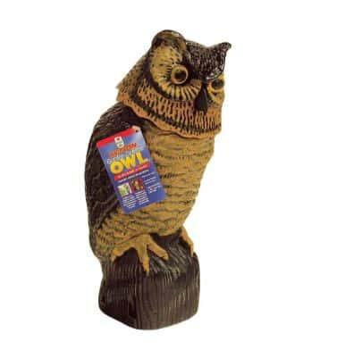 Home Depot Owl Decoy - the Easy Gardener Garden Defense Action Owl.