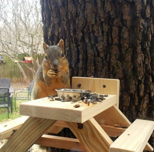 Squirrel picnic table can be used as a fence mounted bird feeder too